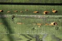 Siding Problems Wood Pecker Damage 01